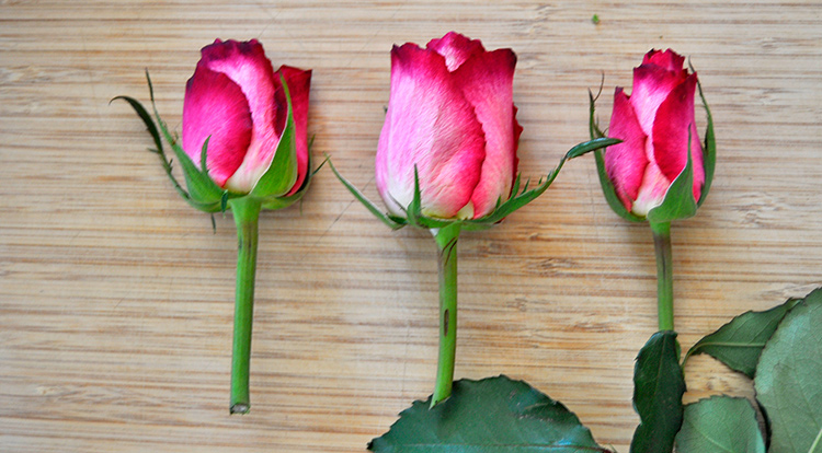 3 How to - How to make flower arrangement. Trim rose.