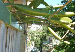 3howto-bamboo-platform-on-balcony