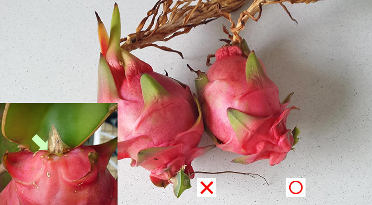 3 How to, Balcony plants: Dragon fruit.