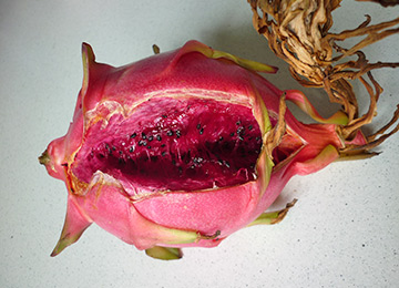 grow-edible-plants-on-balcony-dragon-fruit-is-ripe