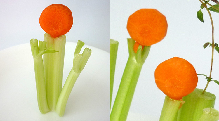 Carrot art lollipop-shaped, carrot shrub decoration, inserting carrot lollipop-shape step finish