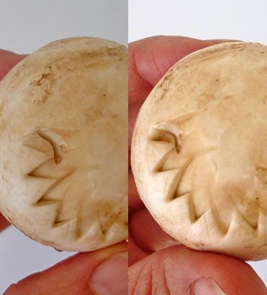3 How to, Mushroom art, hiding bad parts on a mushroom