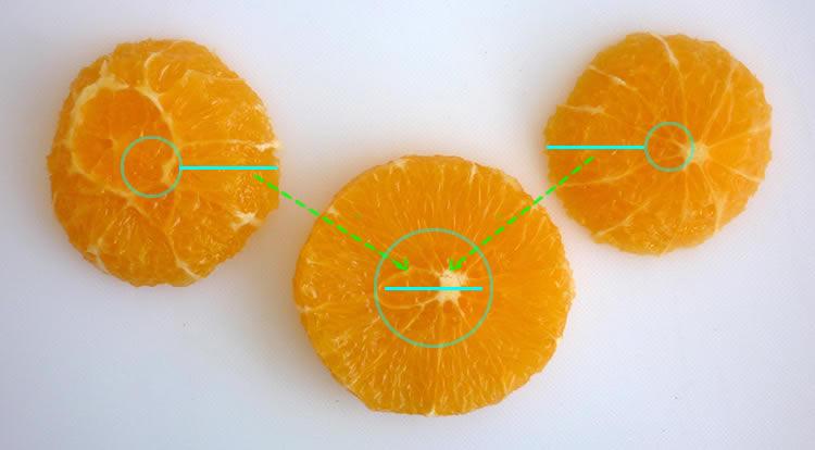 Orange art, Orange chain, slicing orange and making hole in the center step 5