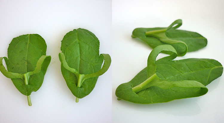 Easy food art with spinach leaves, spinach shoe thongs step 5