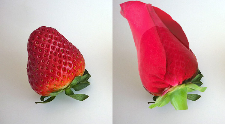 Strawberry rose, choose the right shape strawberry step 2